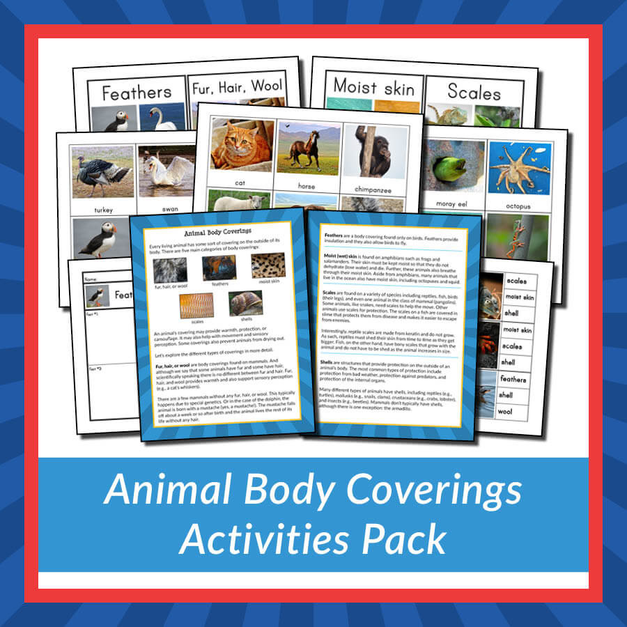 Animal Body Coverings Activities Pack store product image