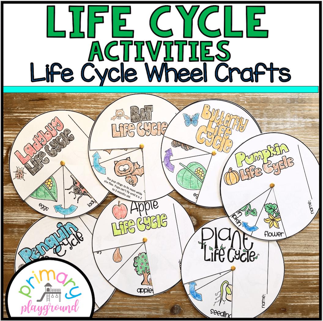 Life Cycle Activities Thumbnail